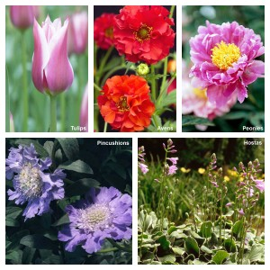 Perennials Collage - Best Flowers to Plant in MN - Homes by Tradition