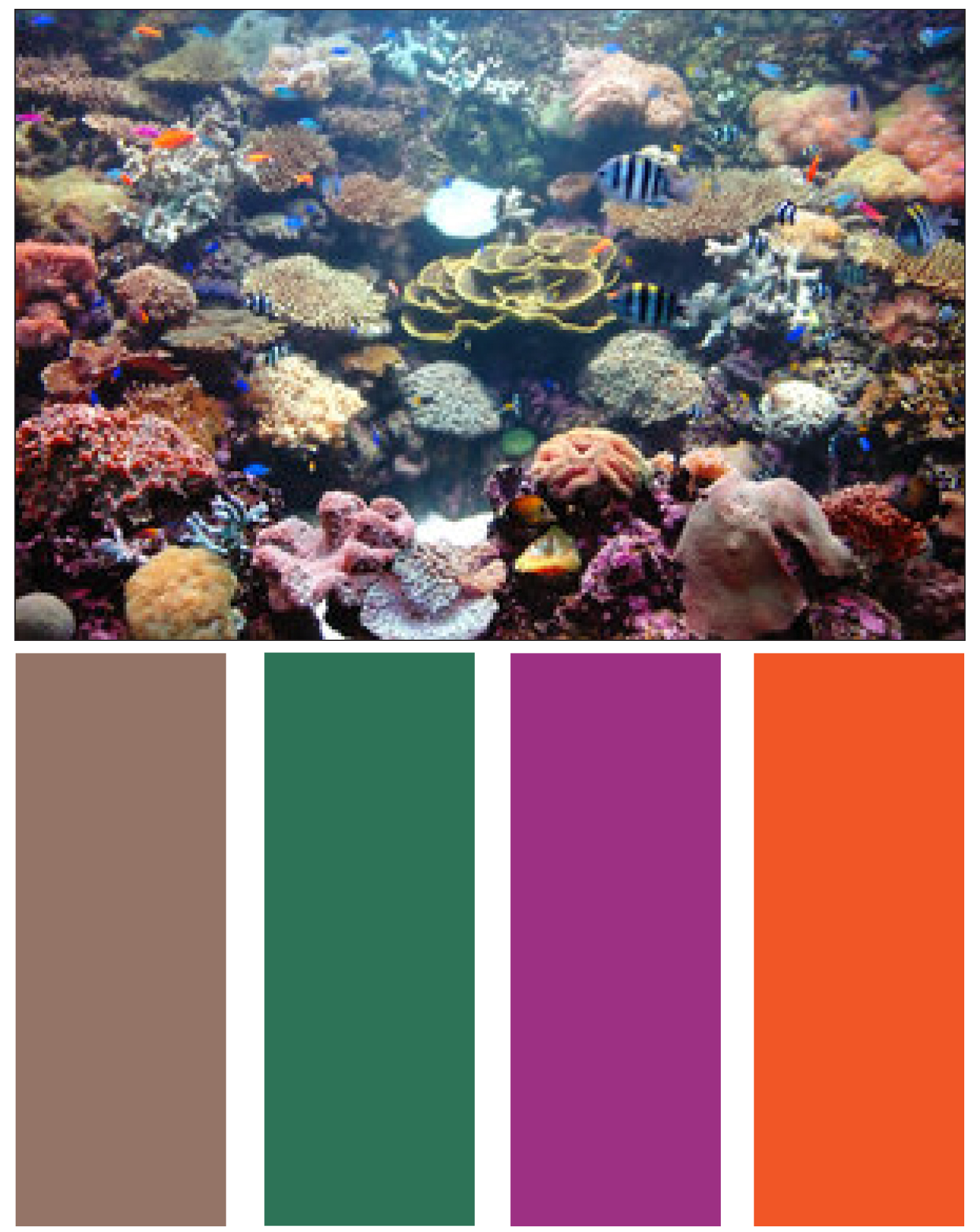 Coral Reef Color Palette Custom Home Builders New Home